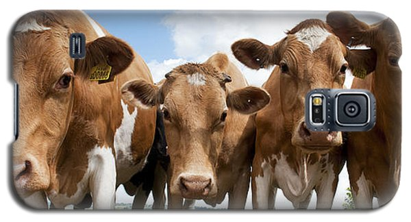 Inquisitive Cows Galaxy S5 Case