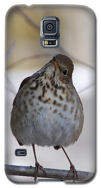Inquisitive Hermit Thrush Galaxy S5 Case