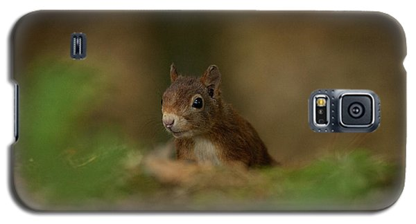 Inquisitive Red Squirrel Galaxy S5 Case by Paul Scoullar