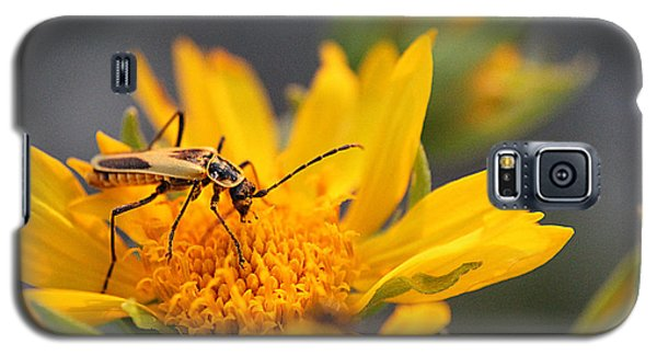 Insect On Cowpen Daisy Galaxy S5 Case