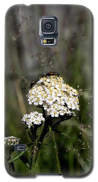 Galaxy S5 Case featuring the photograph Insect On White Flower by Leif Sohlman