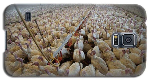 Intensive Turkey Farm Galaxy S5 Case by Peter Menzel