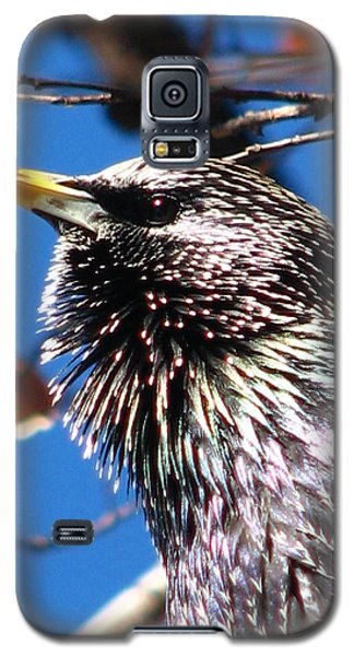 Intent - Bird Body Language Galaxy S5 Case