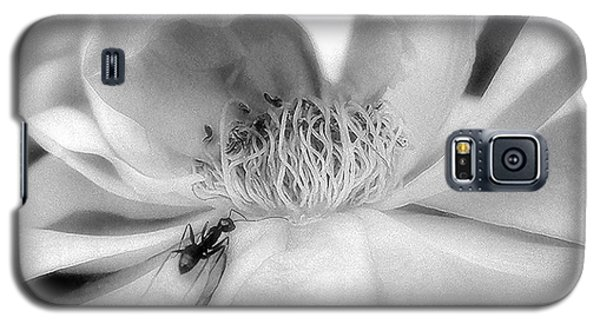 Intrigue Rose In Black And White Galaxy S5 Case by Louise Kumpf