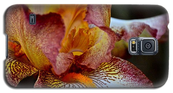 Iris Beauty Galaxy S5 Case by Eve Spring