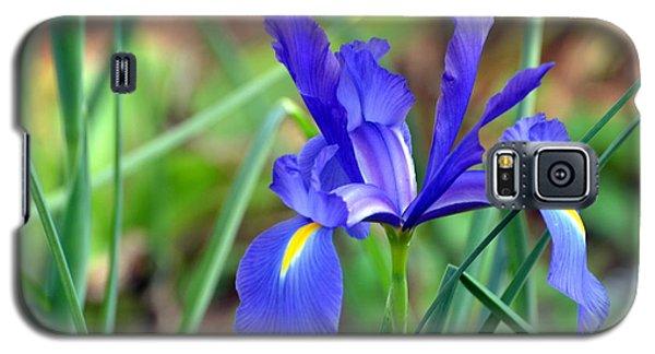 Iris Galaxy S5 Case by Jodi Terracina