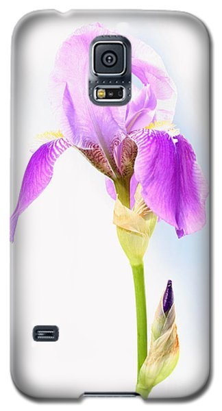 Iris On A Sunny Day Galaxy S5 Case by Steve Augustin