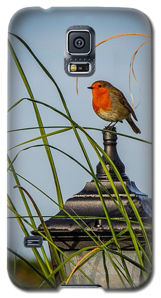 Irish Robin Perched On Garden Lamp Galaxy S5 Case