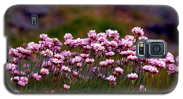 Irish Sea Pinks Galaxy S5 Case by Patricia Griffin Brett
