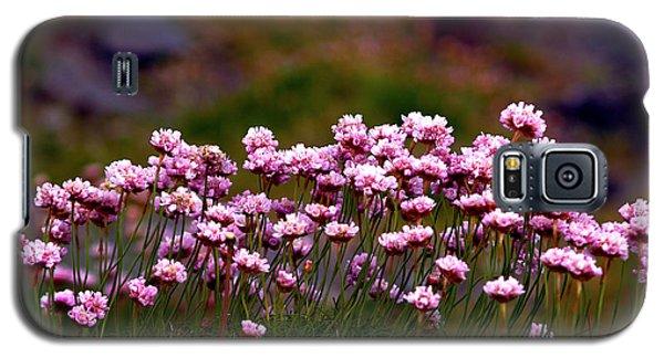 Irish Sea Pinks Galaxy S5 Case