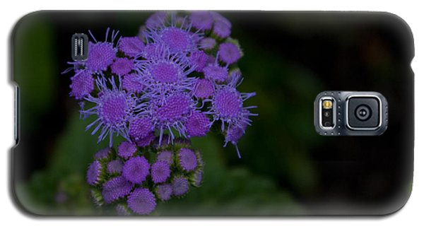 Galaxy S5 Case featuring the photograph Is That Purple by Greg Graham