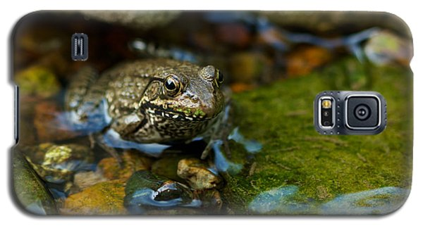 Galaxy S5 Case featuring the photograph Is There A Prince In There? - Frog On Rocks by Jane Eleanor Nicholas