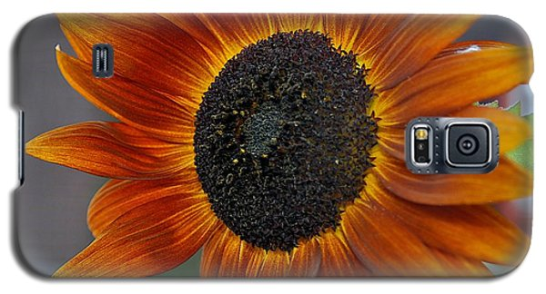 Isabella Sun Galaxy S5 Case by Joseph Yarbrough