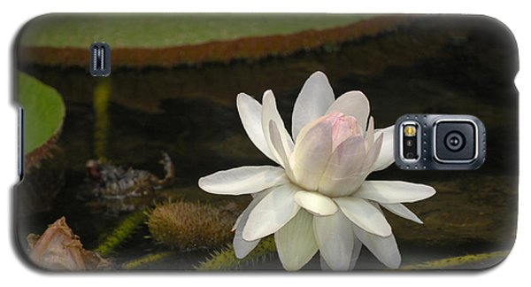 Ischian Water Lily Galaxy S5 Case