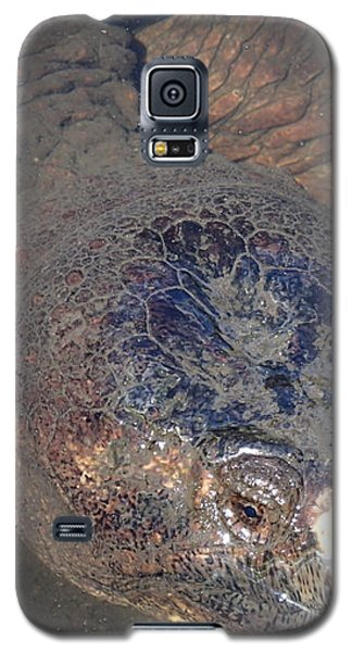 Island Turtle Galaxy S5 Case