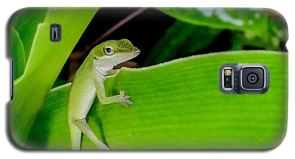 Galaxy S5 Case featuring the photograph It's Easy Being Green Squared by TK Goforth