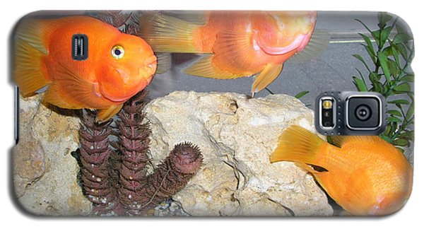 Galaxy S5 Case featuring the photograph It's Not Polite To Stare by Bev Conover