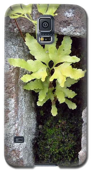 Galaxy S5 Case featuring the photograph Its The Little Things In Life by John Glass