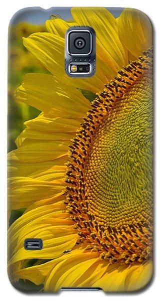 Itsy Bitsy Galaxy S5 Case