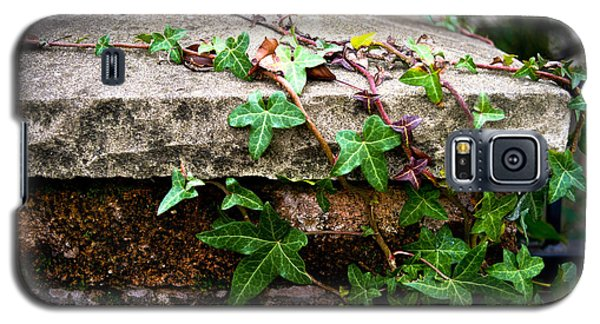 Ivy On Stone Galaxy S5 Case