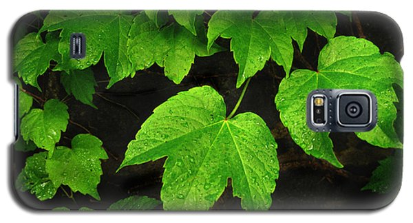 Galaxy S5 Case featuring the photograph Ivy by Tom Brickhouse