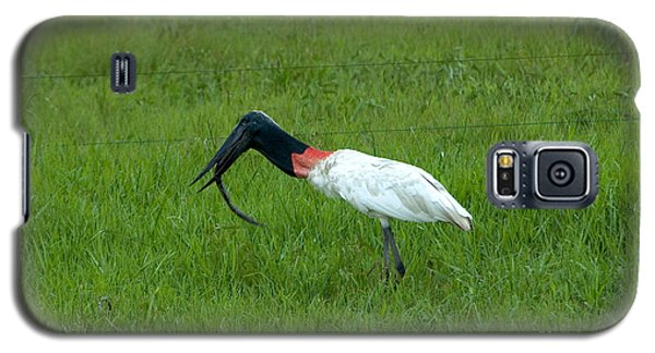 Jabiru Stork Swallowing An Eel Galaxy S5 Case by Gregory G. Dimijian, M.D.