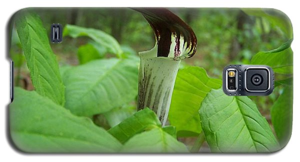 Galaxy S5 Case featuring the photograph Jack In The Pulpit by William Tanneberger
