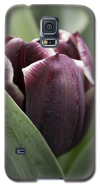 Jackpot Tulip Galaxy S5 Case by Joseph Skompski
