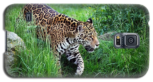 Jaguar On The Prowl Galaxy S5 Case
