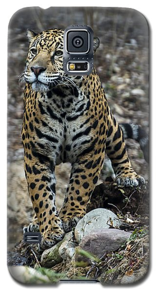 Jaguar Galaxy S5 Case by Phil Abrams