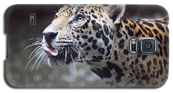 Galaxy S5 Case featuring the photograph Jaguar Sticking Out Tongue by Shoal Hollingsworth