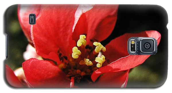 Galaxy S5 Case featuring the photograph Japanese Apple Flower by Vesna Martinjak