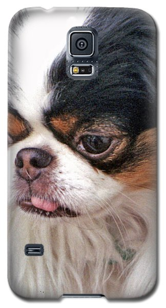 Galaxy S5 Case featuring the photograph Japanese Chin Dog Portrait by Jim Fitzpatrick
