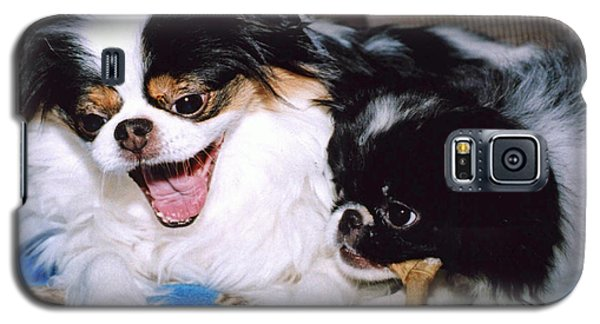 Galaxy S5 Case featuring the photograph Japanese Chin Dogs Hanging Out And Telling Stories by Jim Fitzpatrick