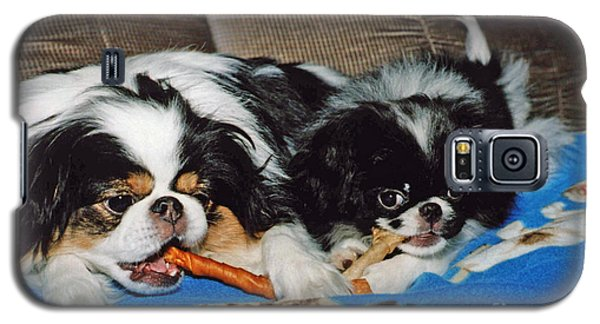 Galaxy S5 Case featuring the photograph Japanese Chin Dogs Hanging Out by Jim Fitzpatrick
