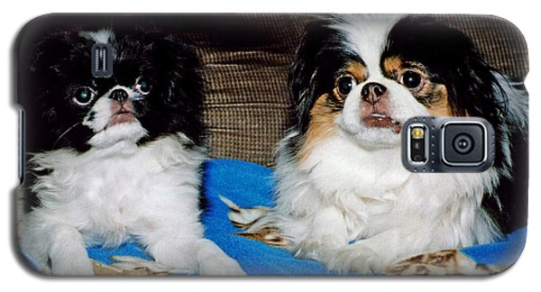 Galaxy S5 Case featuring the photograph Japanese Chin Dogs Looking Guilty by Jim Fitzpatrick