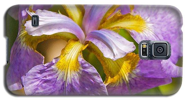 Japanese Iris In Dry Brush Galaxy S5 Case by Susan Crossman Buscho