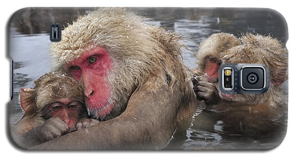 Japanese Macaque Grooming Mother Galaxy S5 Case