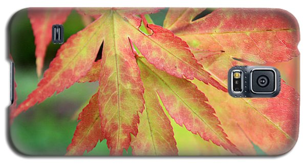 Galaxy S5 Case featuring the photograph Japanese Maple by Gerry Bates