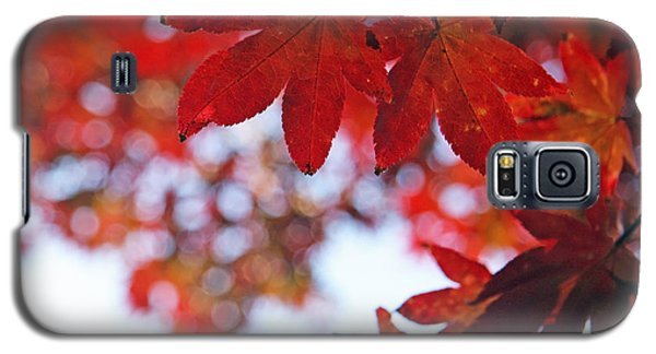 Galaxy S5 Case featuring the photograph Japanese Maple In Fall by Brooke T Ryan