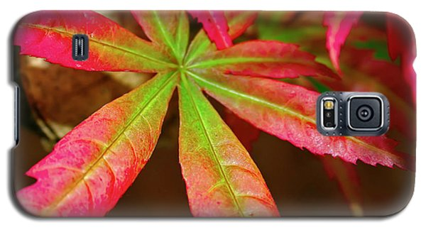 Galaxy S5 Case featuring the photograph Japanese Maple by Kara  Stewart