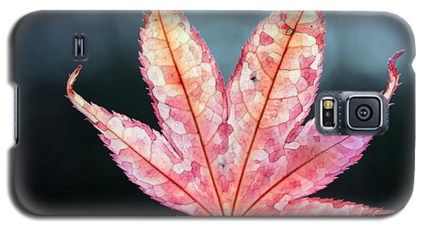 Galaxy S5 Case featuring the photograph Japanese Maple Leaf - 1 by Kenny Glotfelty