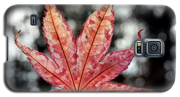 Japanese Maple Leaf - 2 Galaxy S5 Case