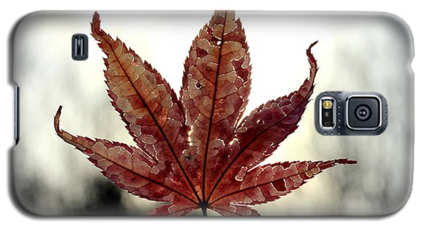 Galaxy S5 Case featuring the photograph Japanese Maple Leaf - 3 by Kenny Glotfelty