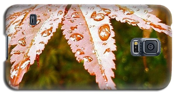 Japanese Maple Leaves Galaxy S5 Case by Marianna Mills