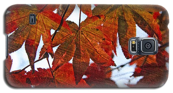 Galaxy S5 Case featuring the photograph Japanese Maple Leaves With Woodgrain by Brooke T Ryan