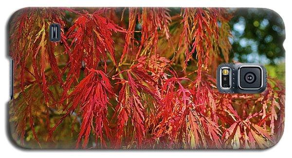 Japanese Maple Galaxy S5 Case