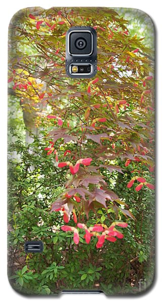 Galaxy S5 Case featuring the photograph Japanese Maple Spring 3 by Nancy Kane Chapman