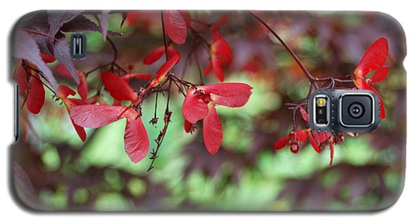 Galaxy S5 Case featuring the photograph Japanese Maple Tree by Eva Kaufman