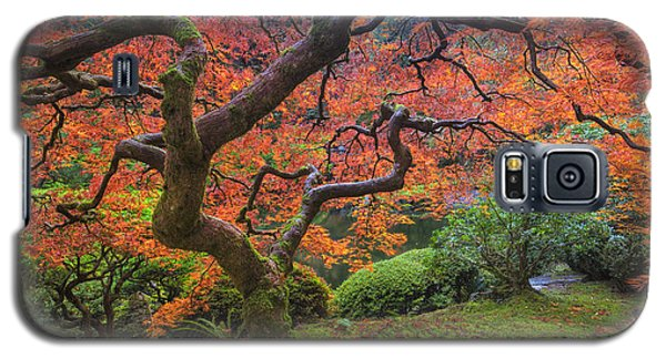 Japanese Maple Tree Galaxy S5 Case